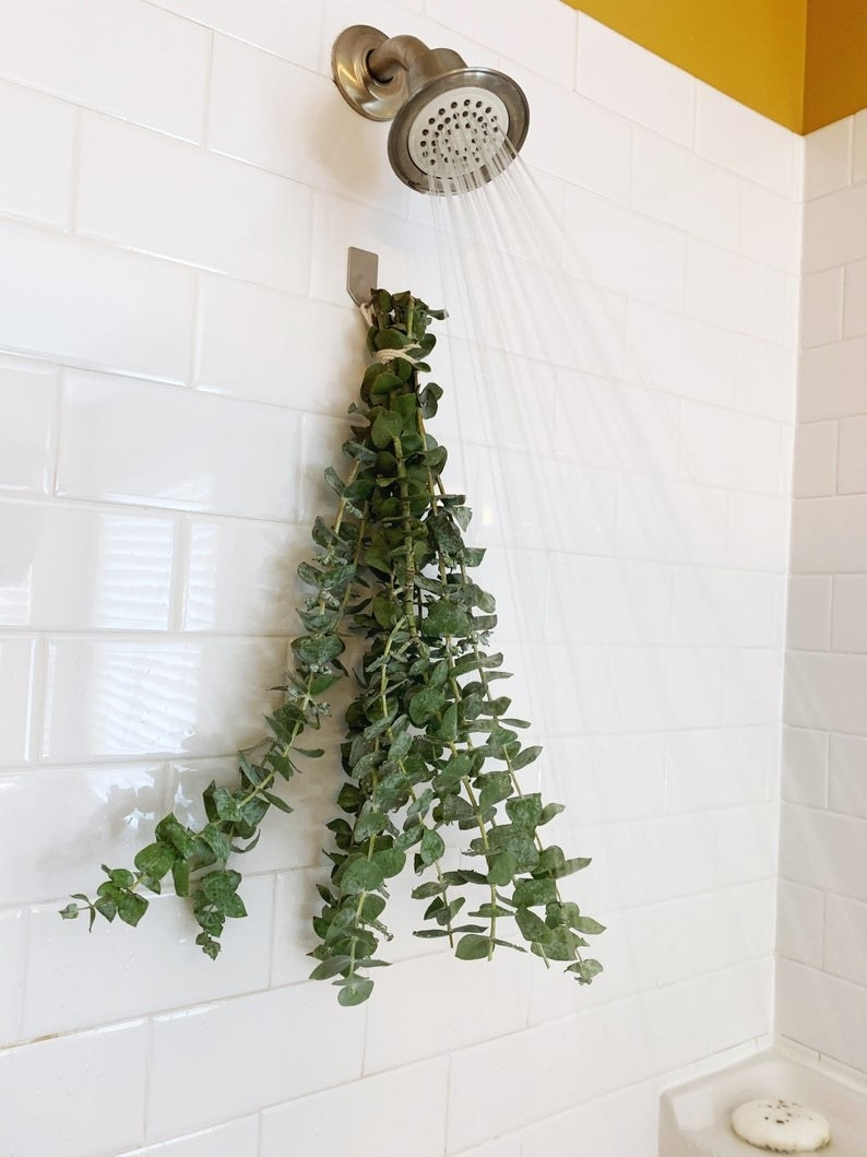 the plant in a running shower