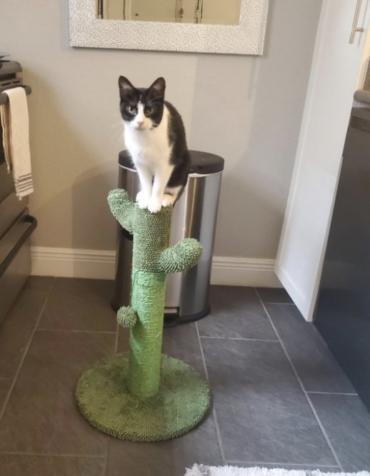 Reviewer's cat sitting on the cactus-themed perch