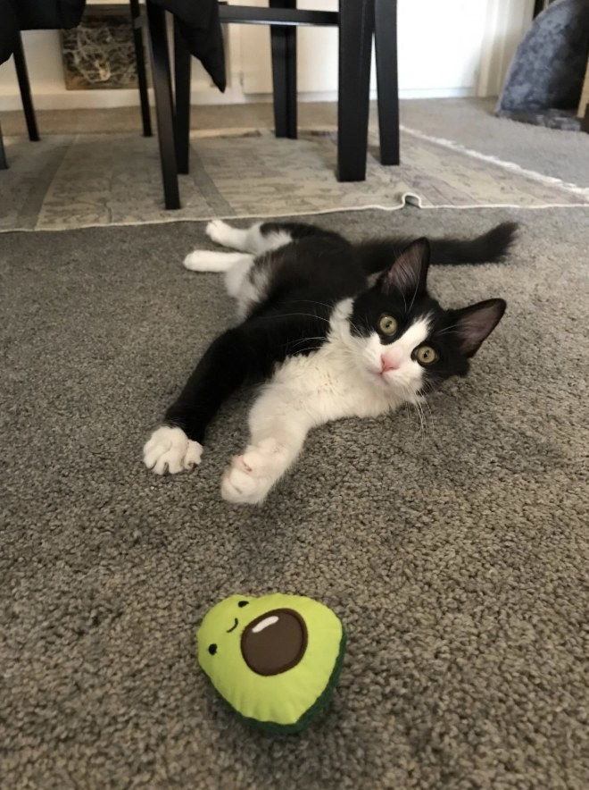 Reviewer's cat playing with the avocado plush toy