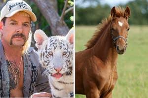 Joe Exotic and tiger and a horse.