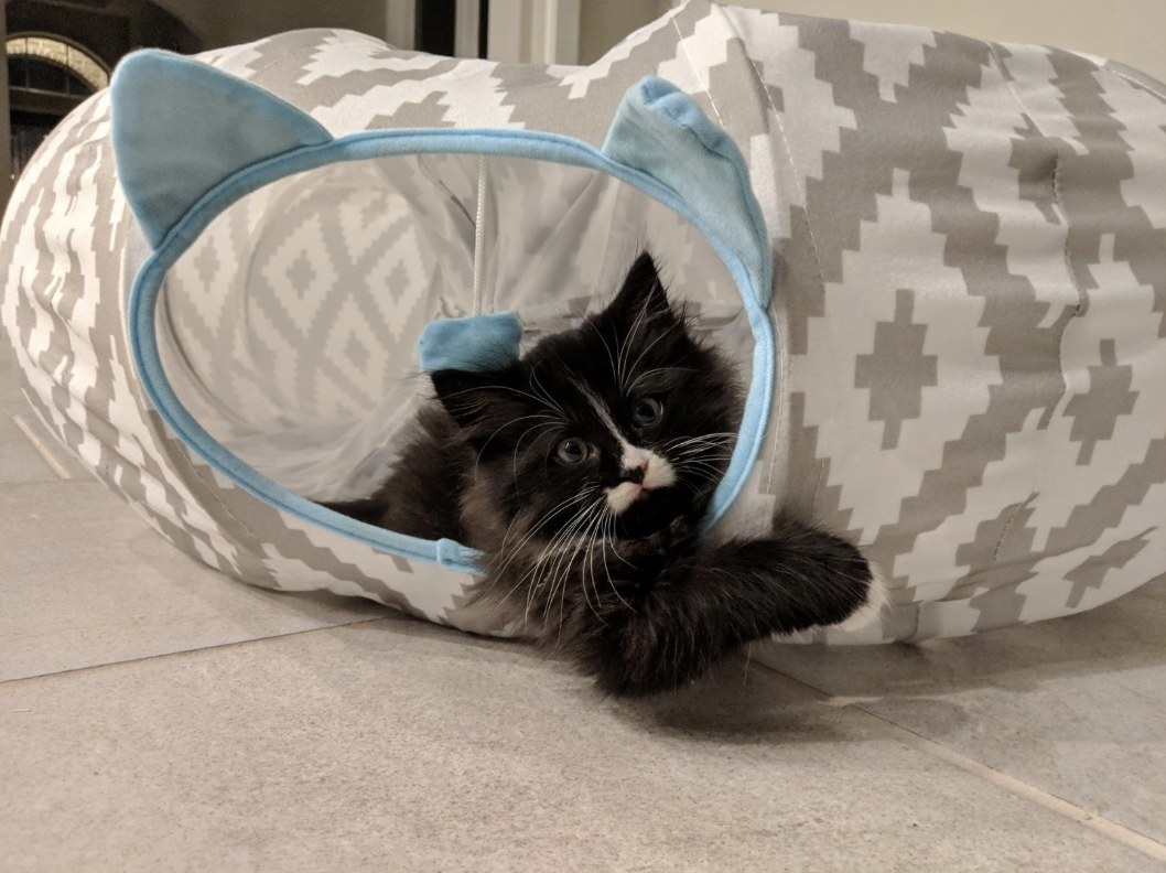 Reviewer's cat sitting in the tunnel bed