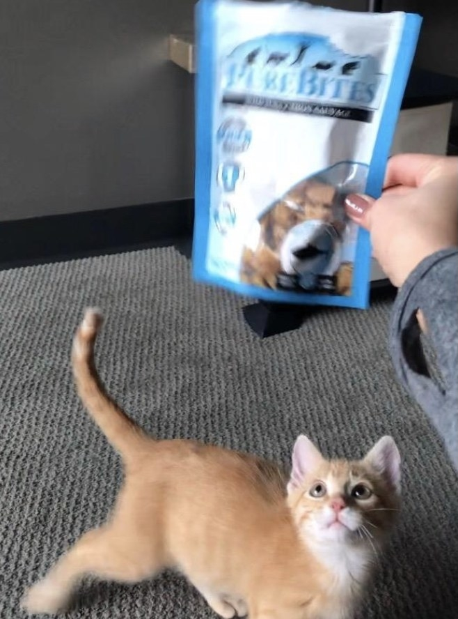 Reviewer's cat staring at the treats