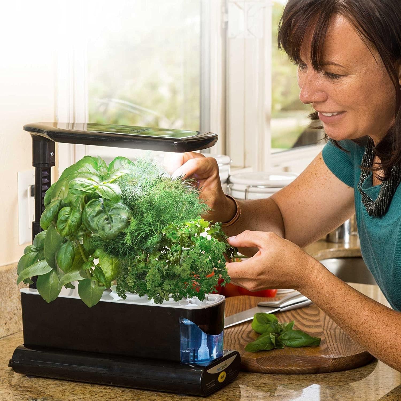 model looks at herbs in aerogarden
