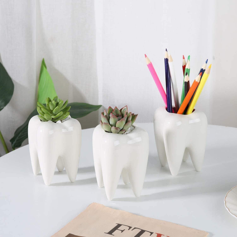Three molar tooth shaped planters