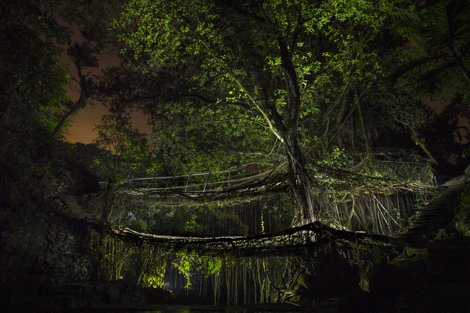 A tree seen at night with a complicated root structure that suspends the tree