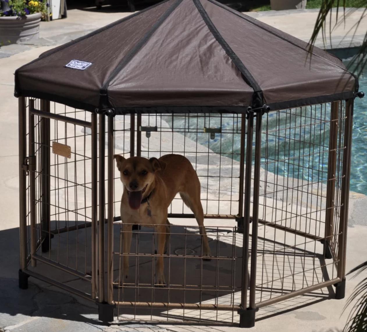 a dog in the gazebo kennel outside