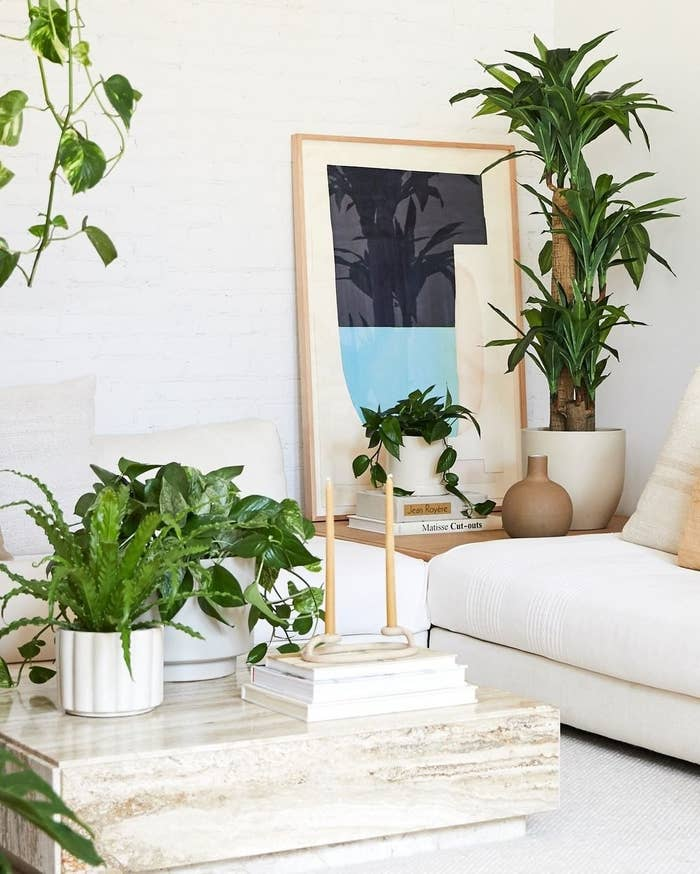 A living room with potted houseplants on a corner table, the coffee table, and hanging from the ceiling