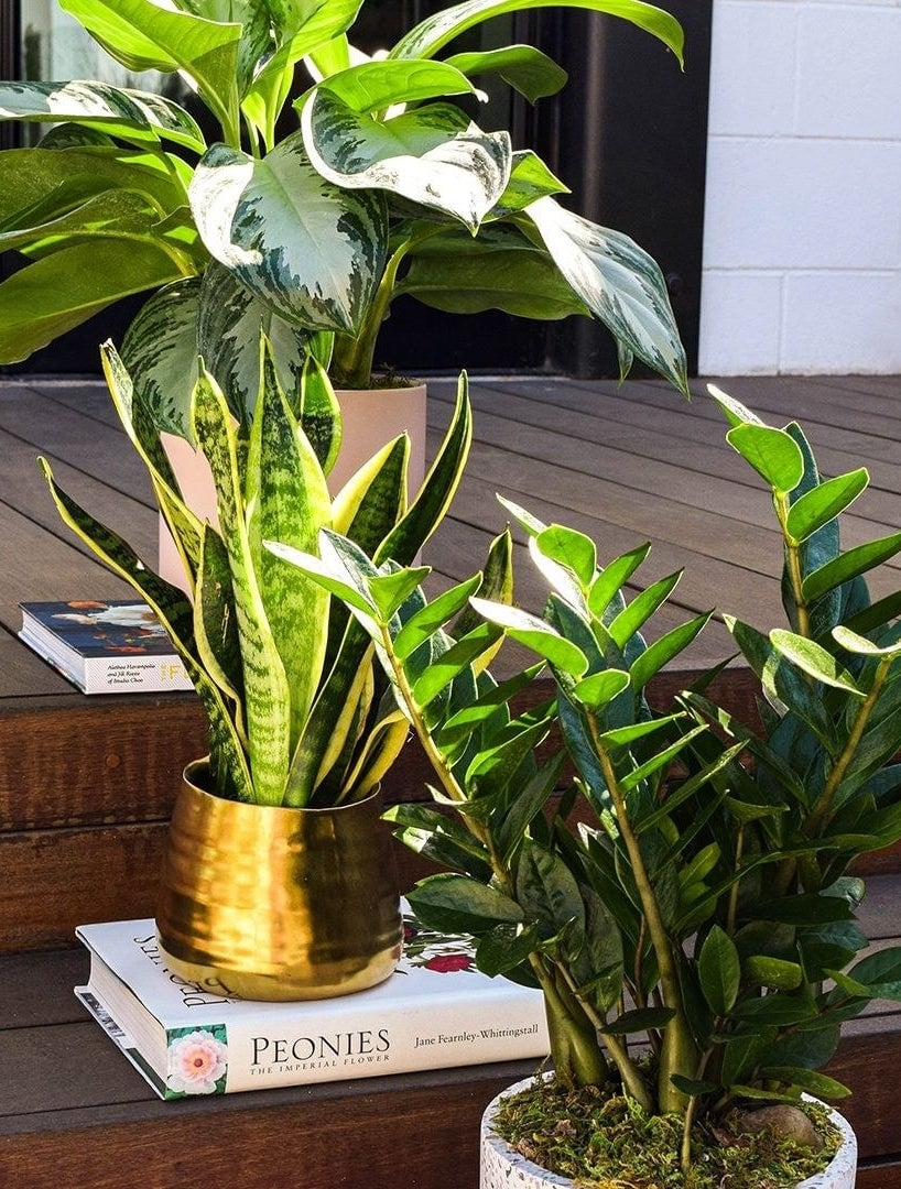 Potted houseplants sitting on a wooden deck's steps