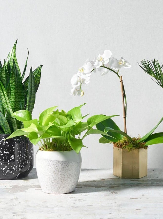 Four houseplants potted and in a row on a tabletop