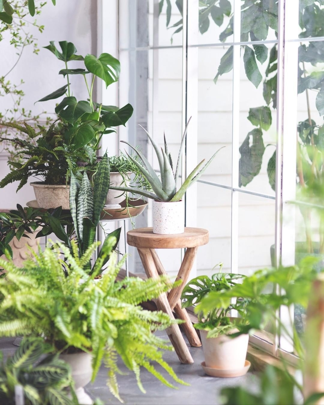 Many houseplants are potted and arranged on various tables and the floor in the corner of a room next to a window