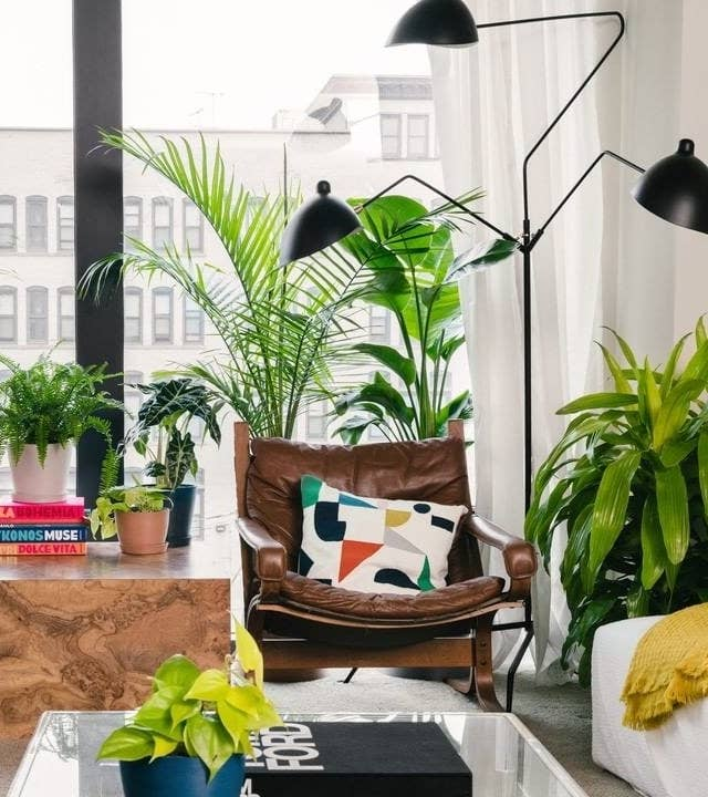 A living room with numerous houseplants on the windowsill, in the corner, on the corner table, and the coffee table