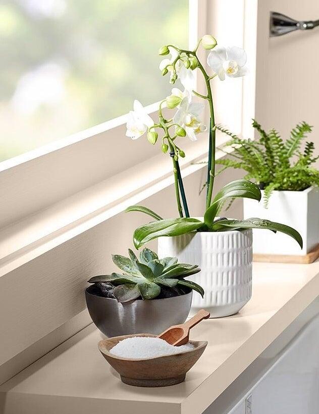 Three houseplants are potted along a shelf below a window