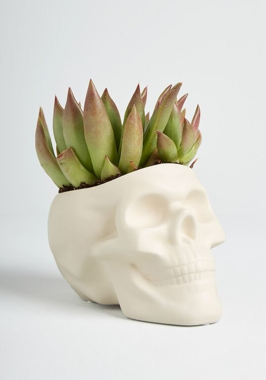 a white skeleton head planter with a succulent in it