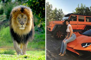 Lion and Kylie sitting on a car.
