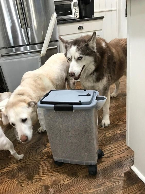Reviewer's dogs sniffing the bin being used to store dry food