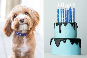 An image of an adorable dog next to an image of a two tiered cake with birthday candles on top