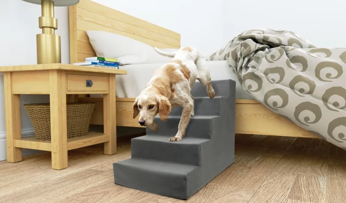 Dog using stairs to get out of bed