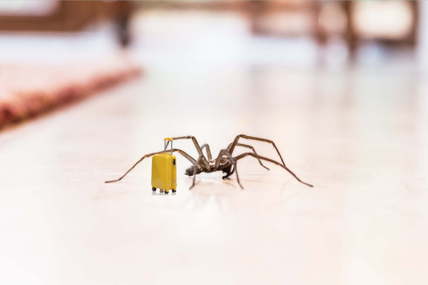Spider crawling with suitcase