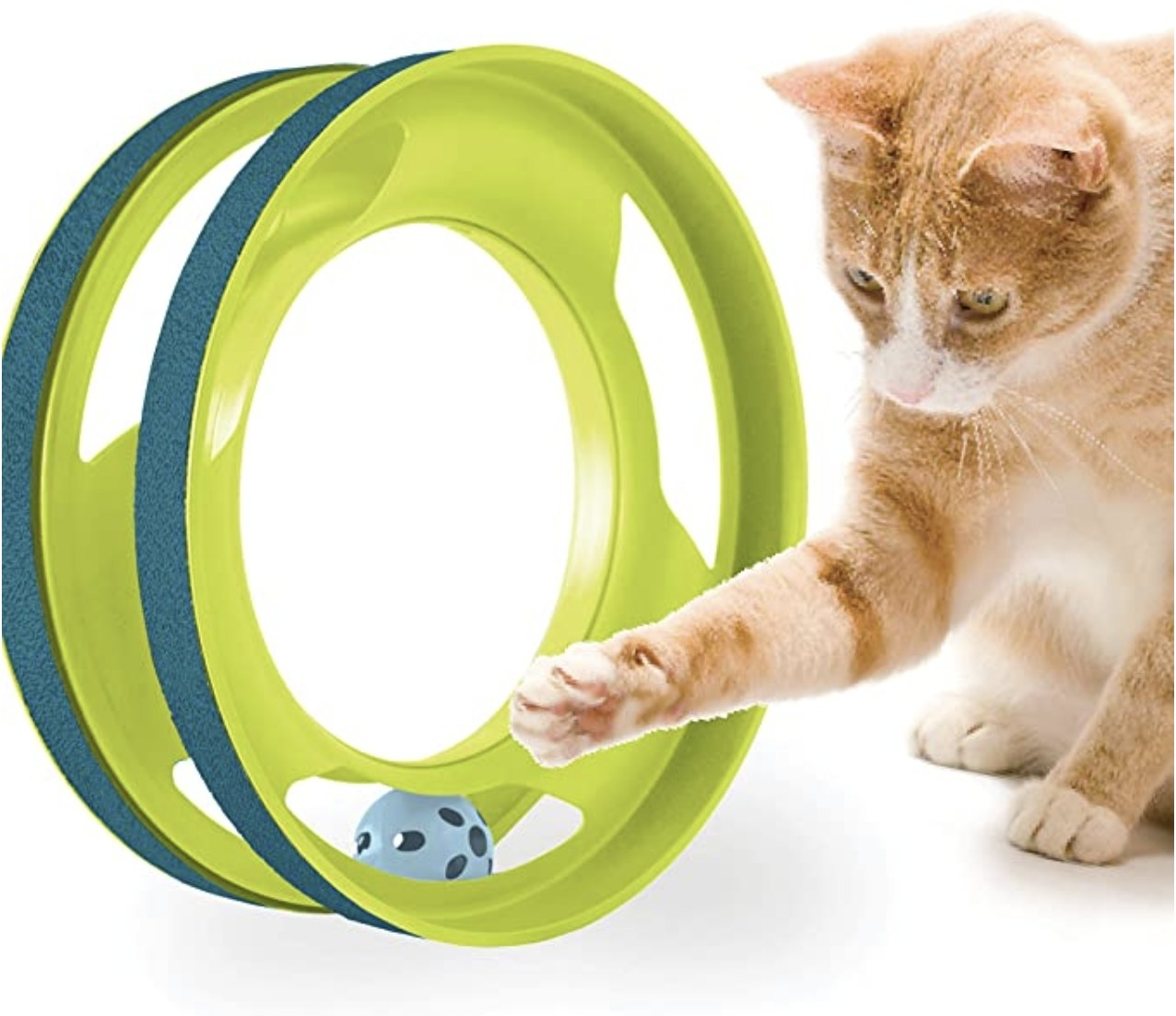 Cat playing with a circle track with a ball inside