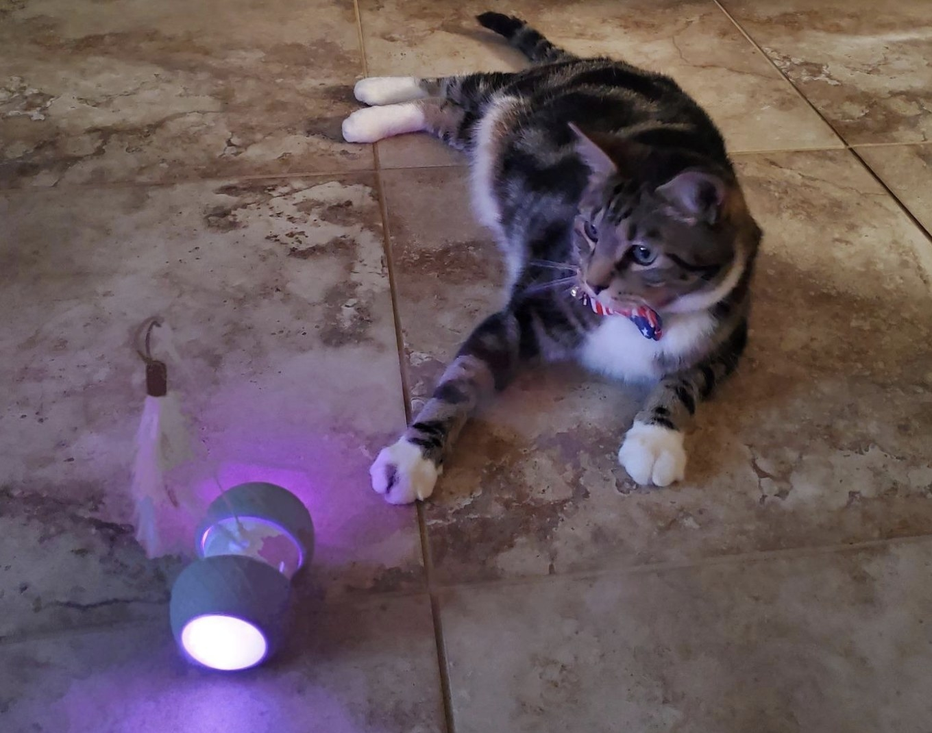 Cat staring at the lit-up remote control cat toy on the floor