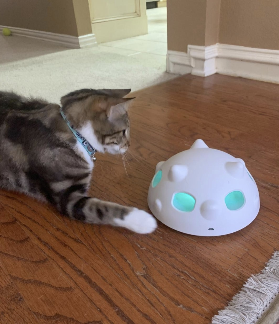 Cat pawing at the robotic pop-and-play cat toy