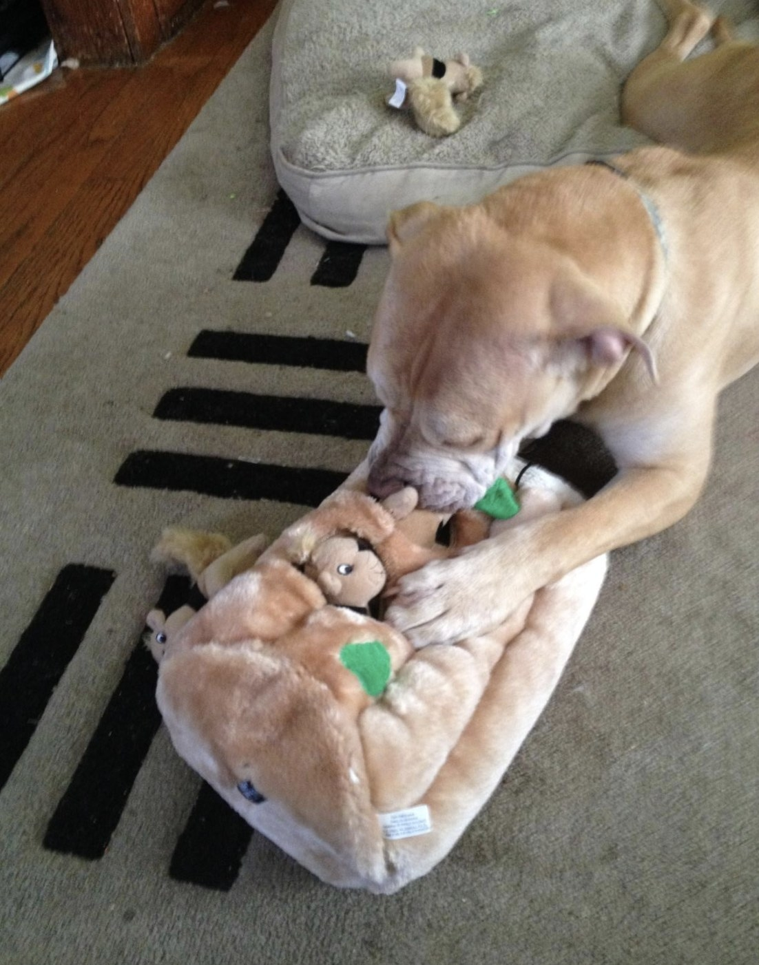 Dog pulling a plush squirrel out of the plush tree trunk