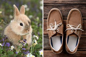 On the left, a baby bunny in a field of flowers, and on the right, a pair of loafers