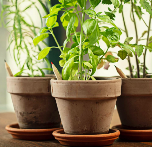 Plantable graphite pencils in brown pots filled with herbs