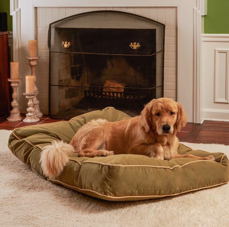 Golden retriever sitting on the green velvet bed.