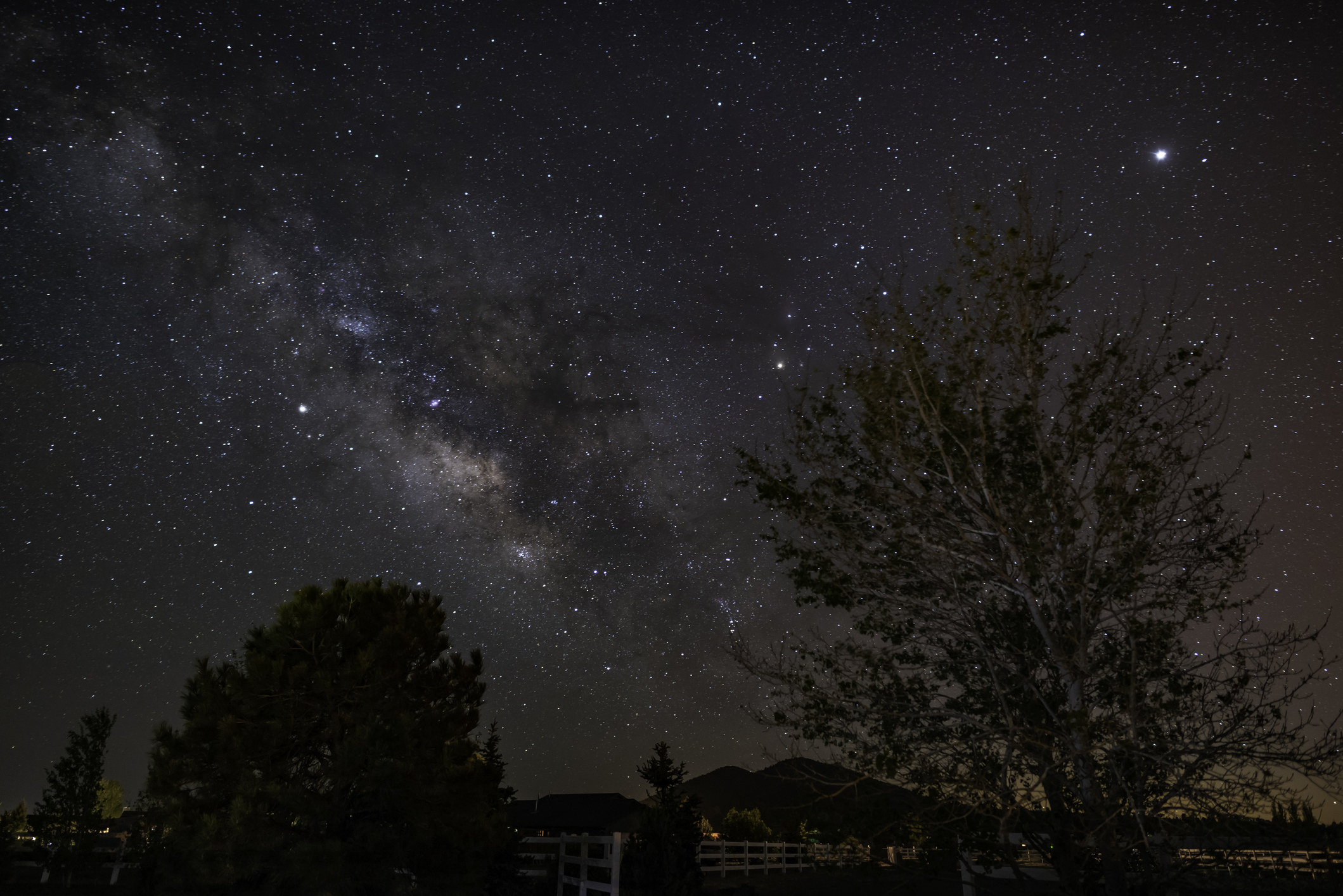 silhouette of two trees with the milky way glittering in a dark sky