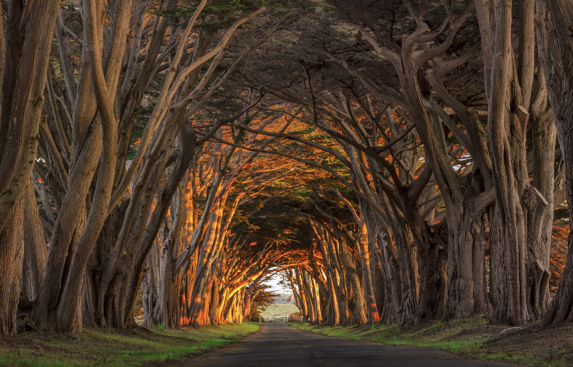 A drive-thru tunnel made of towering cypress trees that curve in.