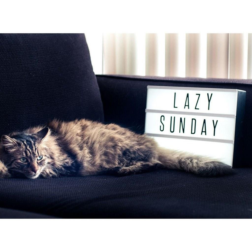 Cat lying next to lightbox saying 'Lazy Sunday'