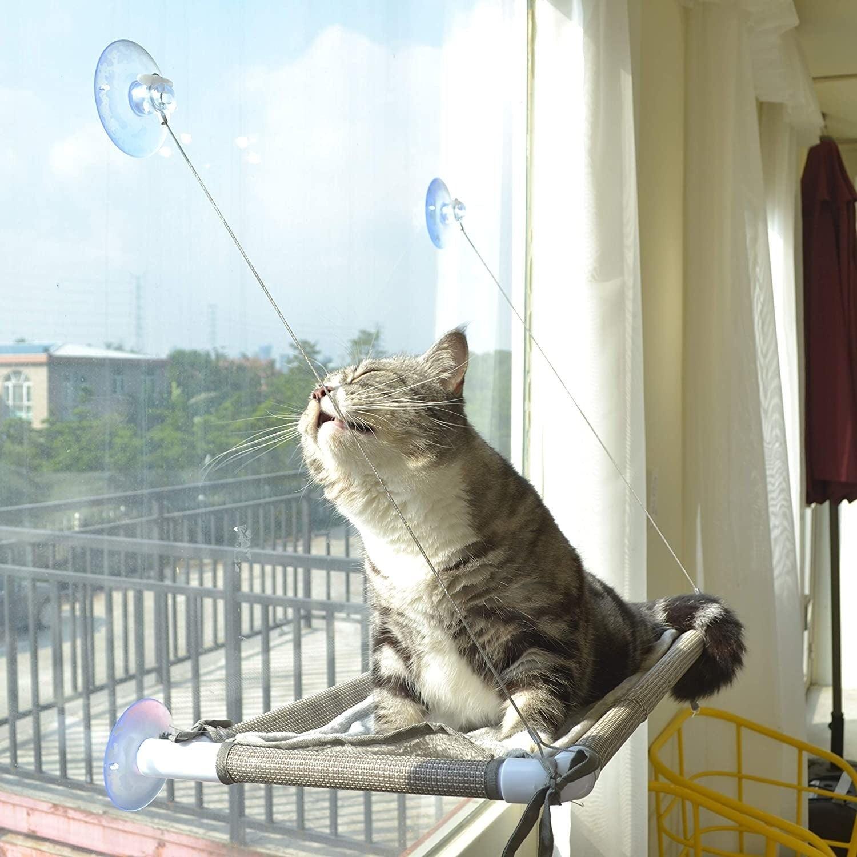 cat soaking in the sun on a window hammock