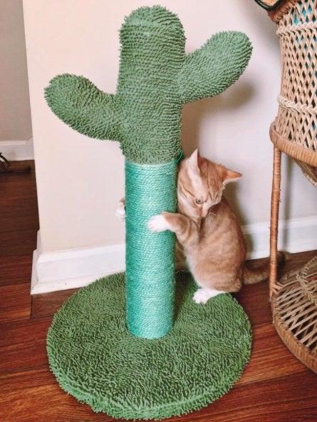 cat scratching a cactus scratching post