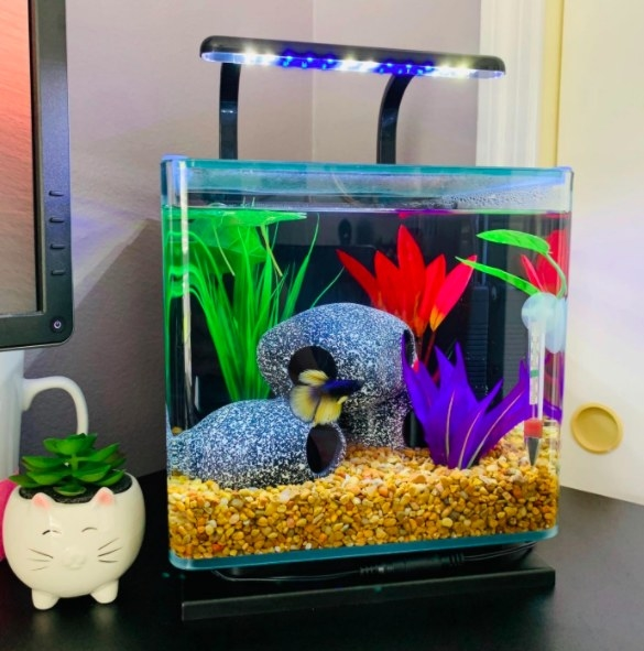 fish tank with LED light on top
