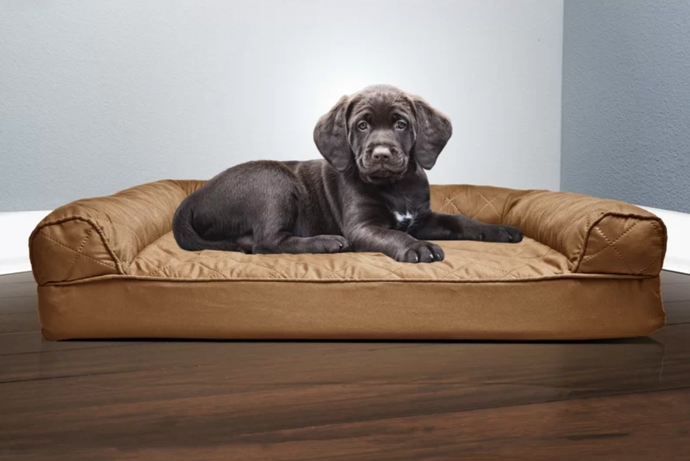 The brown dog sofa with a brown lab sitting on it