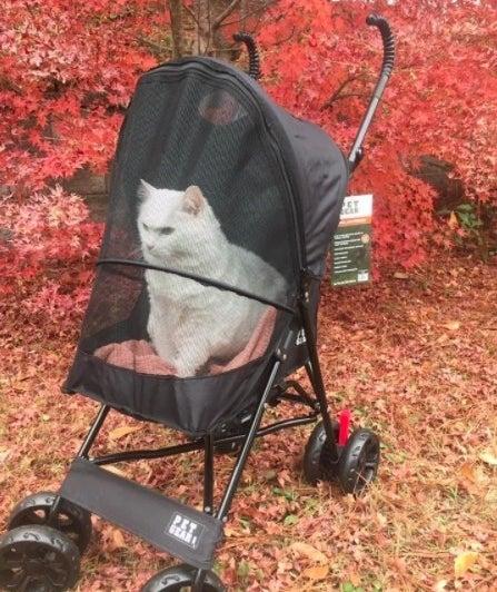 cat in the stroller