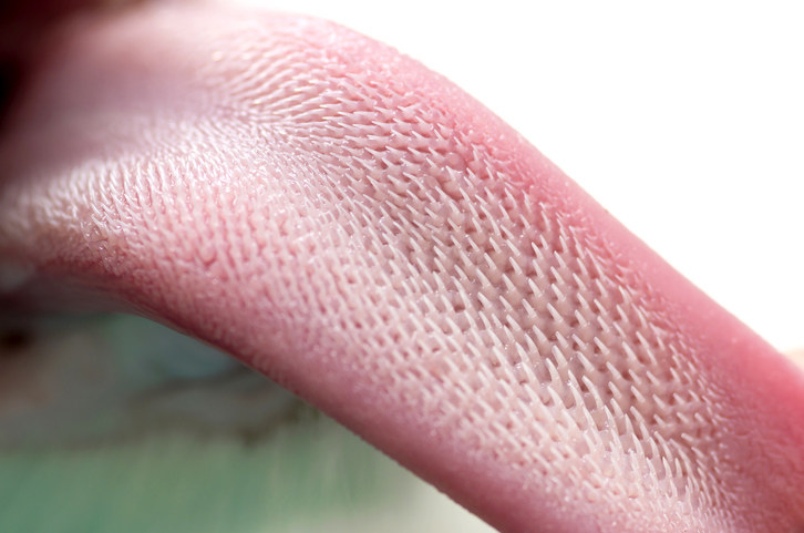Closeup of a cat's tongue, with hundreds of hook-like spikes
