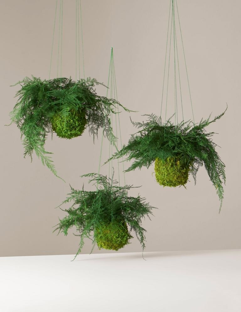 Round moss ball with fern leaves spreading from the top, includes hanging strings