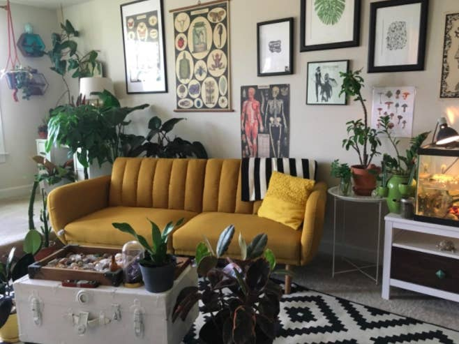 Reviewer's mustard-colored velvet futon with a yellow throw pillow next to a geometric carpet, various plants, and a treasure-chest inspired coffee table