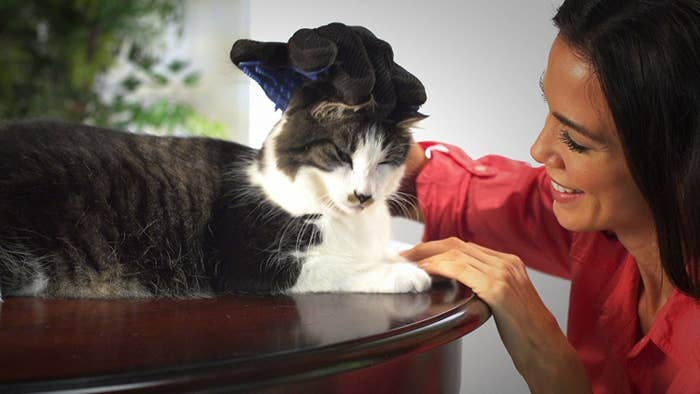A woman grooming a cat with the brush