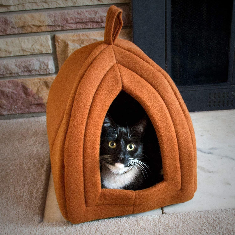 A cat sitting inside the igloo.