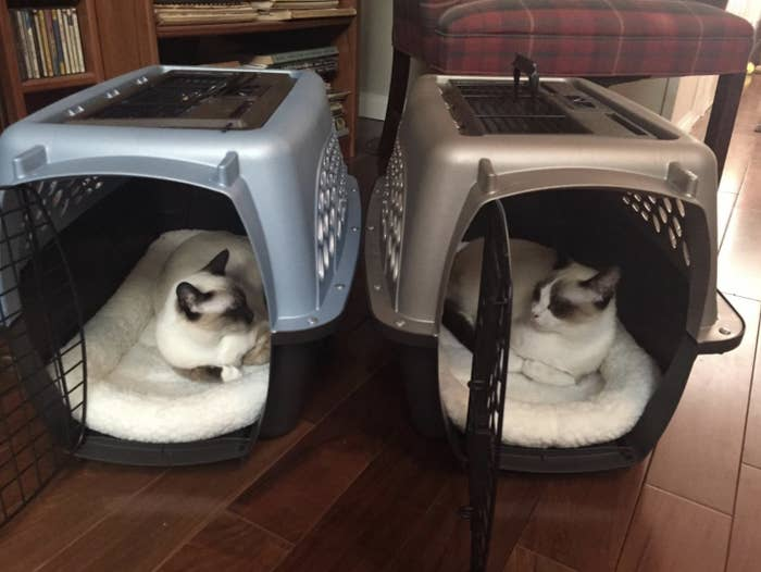 Two cats are napping in separate pet carriers on plush bedding
