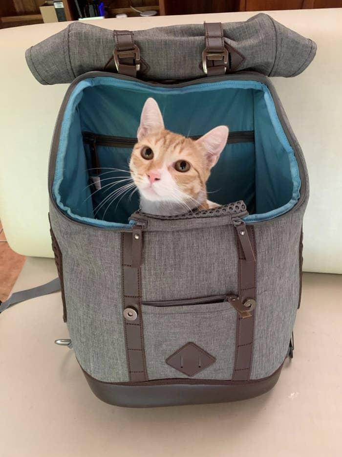 A cat sits inside a grey rucksack carrier bag