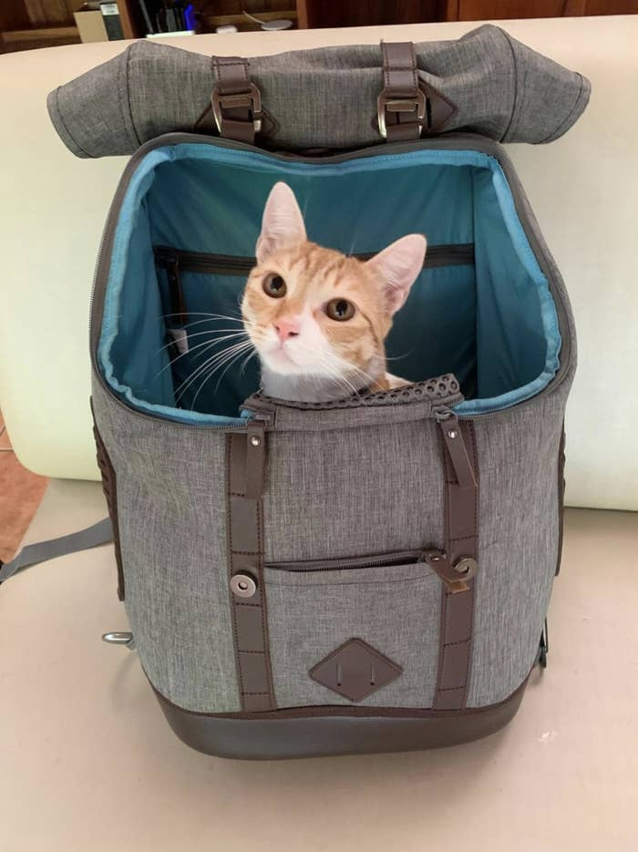 A cat sits inside a grey rucksack carrier bag