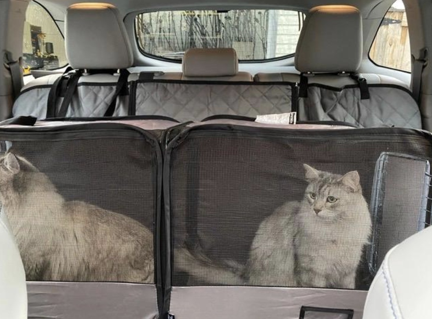 Two cats are sitting in a pet tube kennel in the backseat of a car