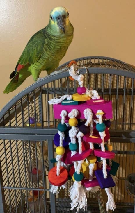 A green parrot sits perched on top of a cage next to a colorful, dangling rope and wood toy
