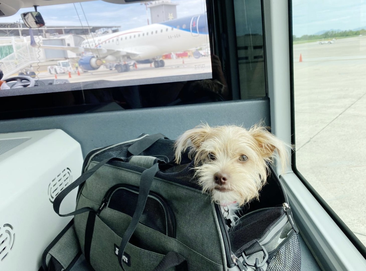 A dog is sitting inside a soft-sided pet carrier at a terminal at an airport with its head out of the bag