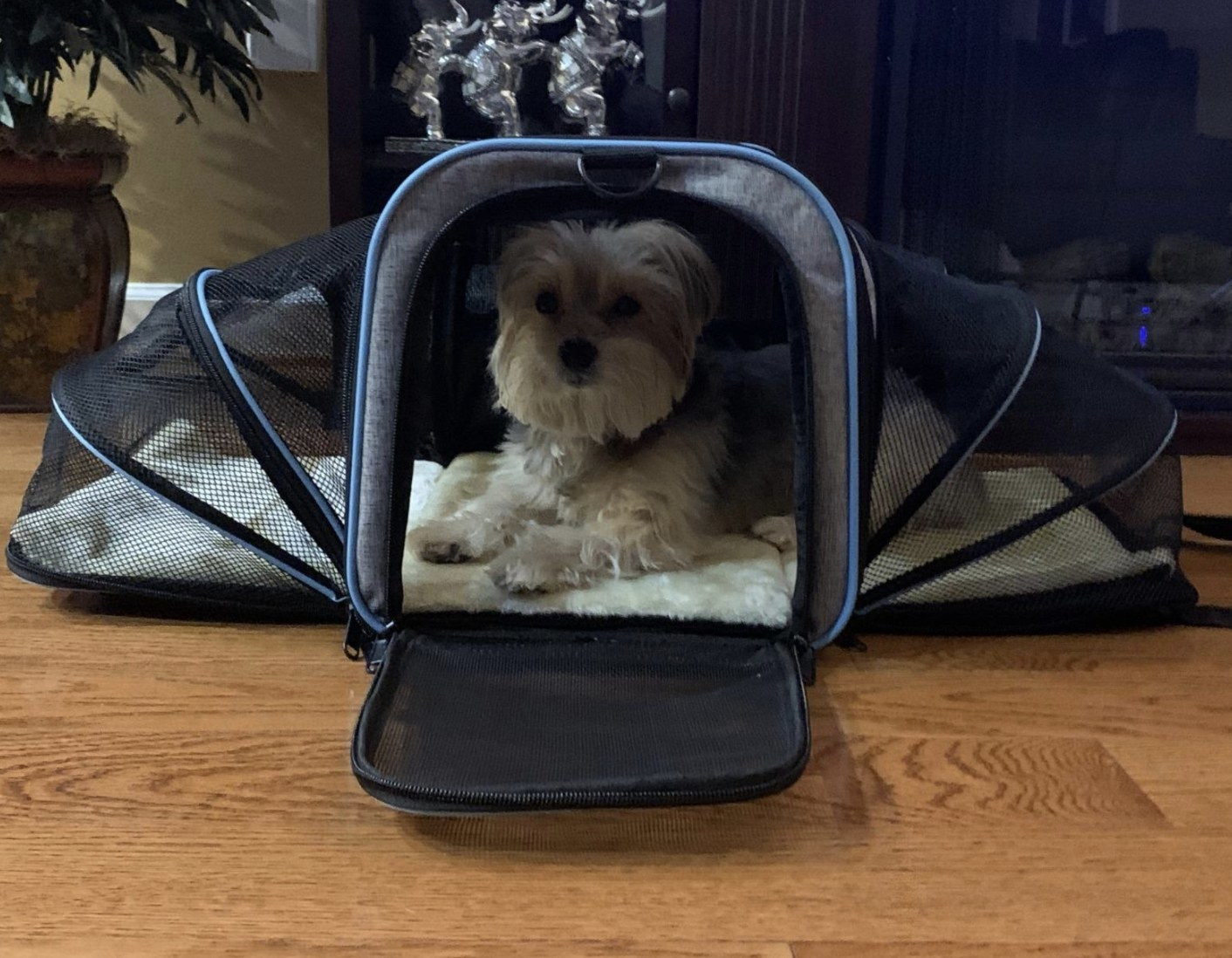 A small dog sits inside a pet carrier with two expandable sides for extra space