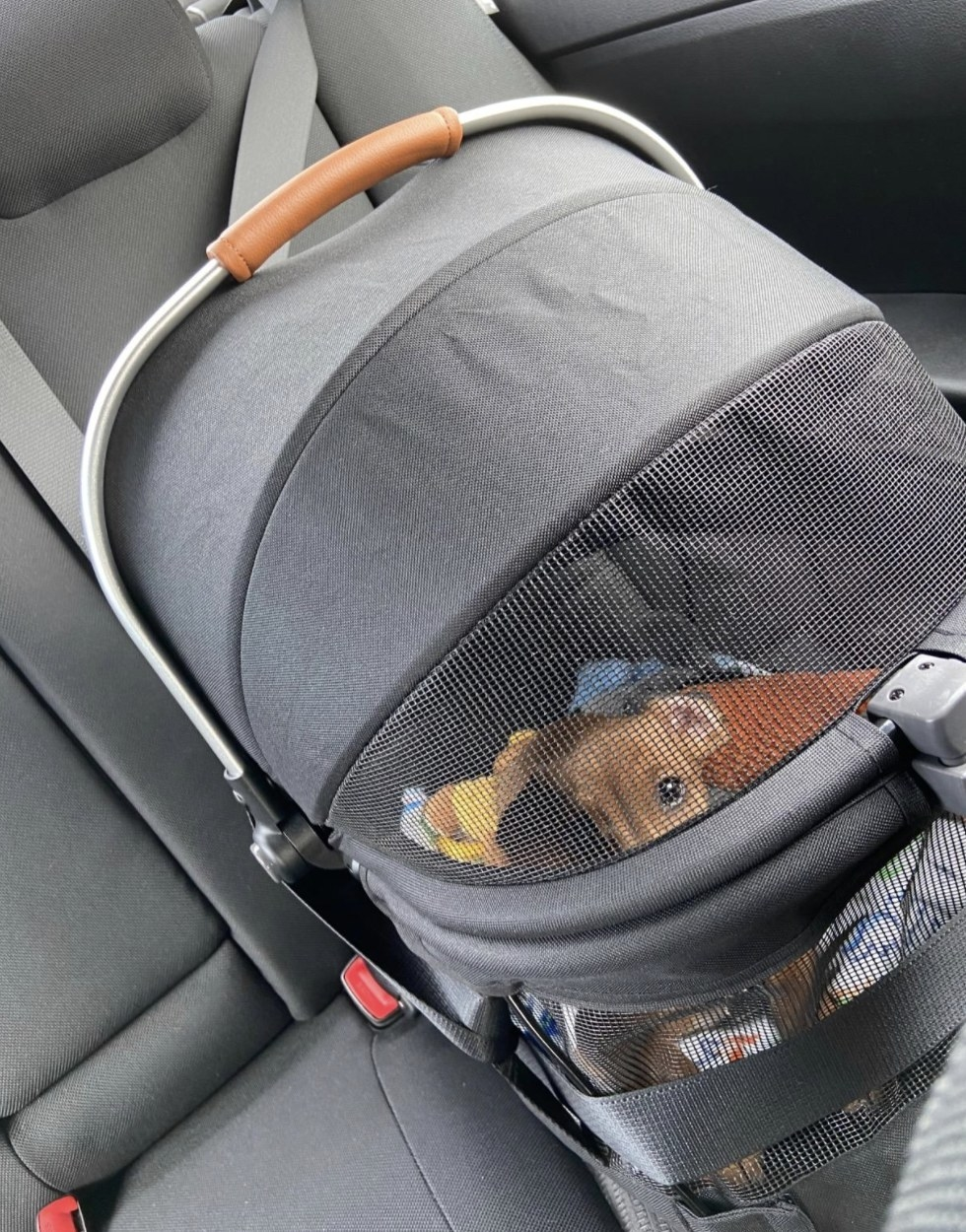 A dachshund sits inside a pet car carrier buckled into the backseat of a car